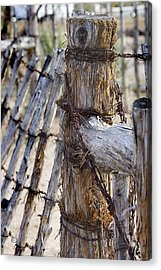 Acrylic Print featuring the photograph Shaggy Fence Post by Phyllis Denton
