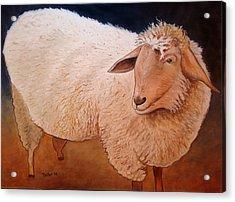 Shaggy Sheep Acrylic Print