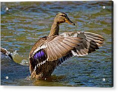 Acrylic Print featuring the photograph Shake It Off by Linda Unger