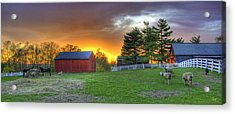 Shaker Animals At Sunset Acrylic Print