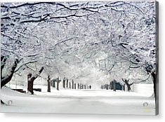Shaker Winter Walkway Acrylic Print
