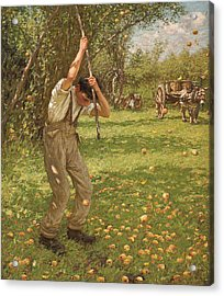 Shaking Down Cider Apples  Acrylic Print by Henry Herbert La Thangue