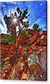 Shaman's Dome Juniper Acrylic Print by ABeautifulSky Photography