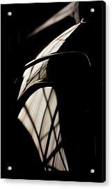 Acrylic Print featuring the photograph Shapes by Paul Job