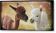Sharing A Meal Acrylic Print