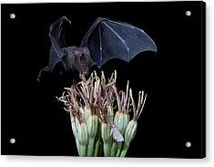 Sharing With The Moth Acrylic Print by E Mac MacKay