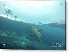 Shark Attack Acrylic Print