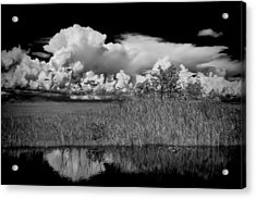 shark river slough BW Acrylic Print by Rudy Umans