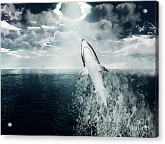 Shark Watch Acrylic Print by Digital Art Cafe