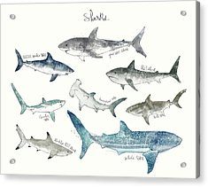 Sharks - Landscape Format Acrylic Print by Amy Hamilton