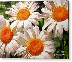 Shasta Daisies 2015 Acrylic Print