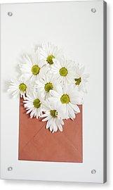 Shasta Daisies In Orange Envelope Acrylic Print
