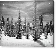 Shasta Snowtrees Acrylic Print