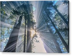 Acrylic Print featuring the photograph Shazam by Patricia Davidson
