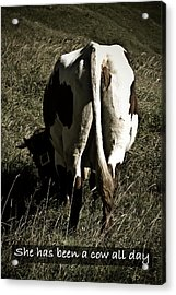 Acrylic Print featuring the photograph She Has Been A Cow All Day by Frank Tschakert