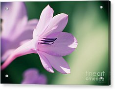 Acrylic Print featuring the photograph She Listens Like Spring by Linda Lees