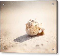 She Sells Sea Shells Acrylic Print by Lisa Russo