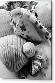 She Sells Seashells Acrylic Print by Julia Wilcox