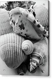 She Sells Seashells Acrylic Print by Julia Wilcox