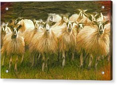 Sheep At Hadrian's Wall Acrylic Print