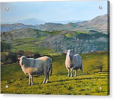 Acrylic Print featuring the painting Sheep At Rhug by Harry Robertson