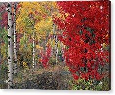 Sheep Canyon In Autumn Acrylic Print by Leland D Howard