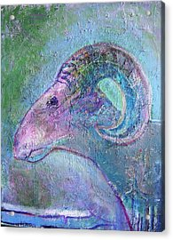 Sheep Acrylic Print by Dave Kwinter