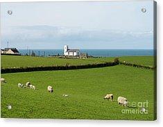Acrylic Print featuring the photograph Sheep Grazing On Irish Coastline by Juli Scalzi