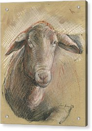 Sheep Head Acrylic Print by Juan Bosco