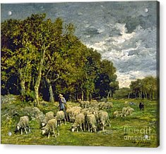 Sheep In A Pasture Acrylic Print by MotionAge Designs