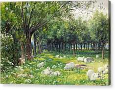 Sheep In An Orchard At Springtime Acrylic Print by Louis Fairfax Muckley