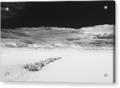 Sheep In Snow On A Beautiful Day In  Alnmouth, Northumberland. Acrylic Print