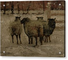 Sheep In The Snow Acrylic Print by John Reynolds