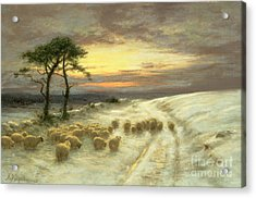 Sheep In The Snow Acrylic Print by Joseph Farquharson