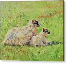 Sheep In The Spring Time,la Vie Est Belle Acrylic Print