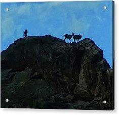 Sheep On A Mountaintop Acrylic Print