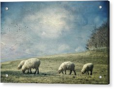 Sheep On The Hill Acrylic Print by Kathy Jennings