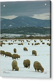 Sheep On Winter Field Acrylic Print