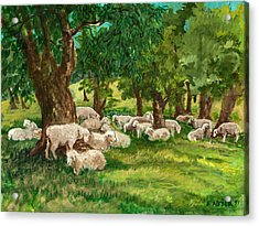 Sheep Pasture Ithaca New York Acrylic Print by Ethel Vrana
