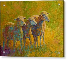 Sheep Trio Acrylic Print by Marion Rose