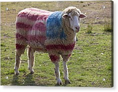 Sheep With American Flag Acrylic Print by Garry Gay