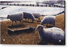 Sheepish Acrylic Print by Denny Bond