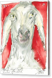 Sheeps Are Not Always Kind .... Acrylic Print by Joerg Bernhard Klemmer