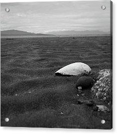 Shell And Sand Acrylic Print
