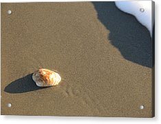 Shell And Waves Part 2 Acrylic Print by Alasdair Turner