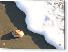 Shell And Waves Part 3 Acrylic Print by Alasdair Turner