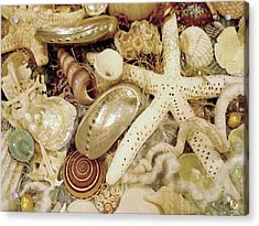 Acrylic Print featuring the photograph Shell Collection by Rosalie Scanlon