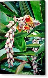Shell Ginger Acrylic Print