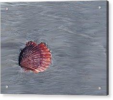 Shell Imprint Acrylic Print by Linda Sannuti