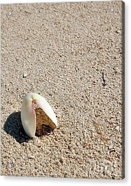 Shell In Sand Acrylic Print